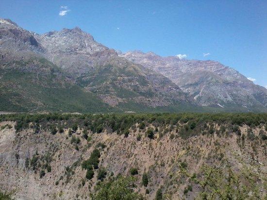 Rancagua, Chile:                   en la pared hacen sus nidos los loros Tricahue