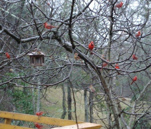 Shadetree Inn : Shadetree's many birds!