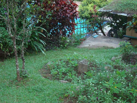 Oruthota Chalets:                   the gardens