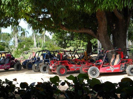 Vista Sol Punta Cana:                                     Wild Tiger Dune Buggy