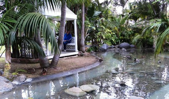Bahia Resort Hotel:                   Relaxing in the Garden with the Ducks