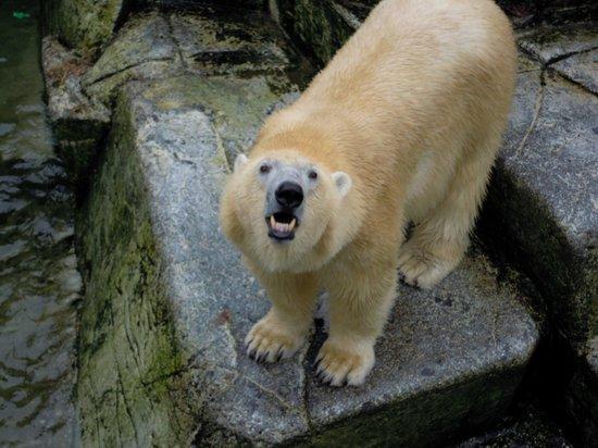 Holstebrovej 15 viborg zoo i Sjælland