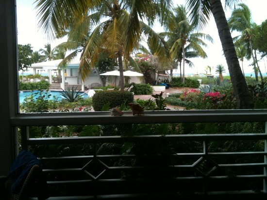 Ocean Club West:                   The view from our room - steps the the pool and beach