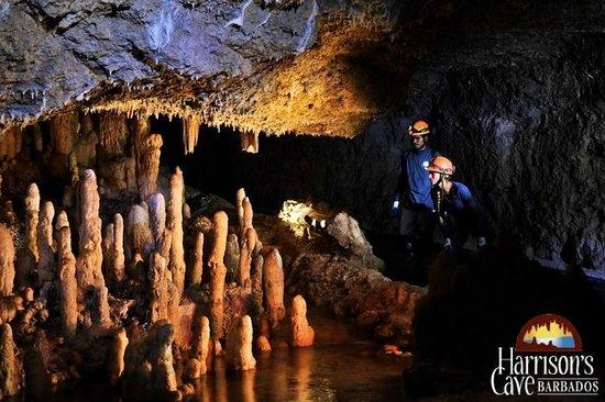 Harrisons Cave Eco Tour