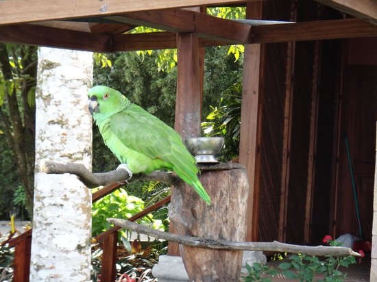 Hotel El Silencio del Campo:                                     Friend who watches over the the dining area