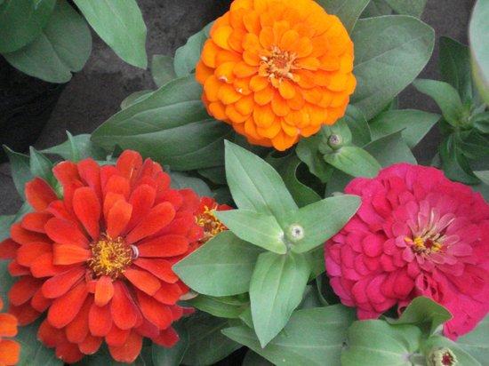 Vivero fotograf a de jardin japones buenos aires for Viveros en capital federal