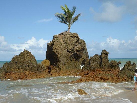 Praia de Tambaba:                   Digno de cartão postal