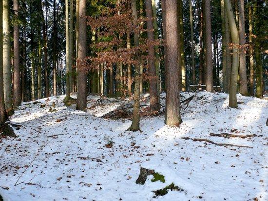 Ottenbronn, Németország: Auch dieser Grabhügel wurde bereits vor rund 100 Jahren geöffnet