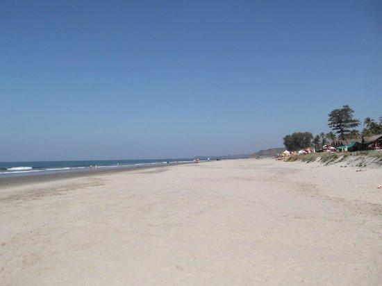 Molly's Nest:                                     Beach