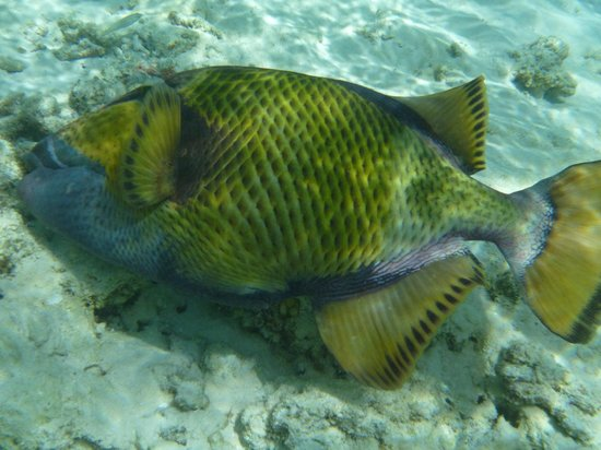 Adaaran Prestige Vadoo:                   énorme poisson
