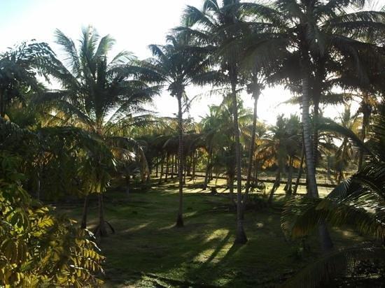 Kawann Beach Hotel:                   vue des chambres