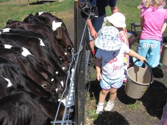 FoodPath Culinary Tours:                                     children giving milk to calves