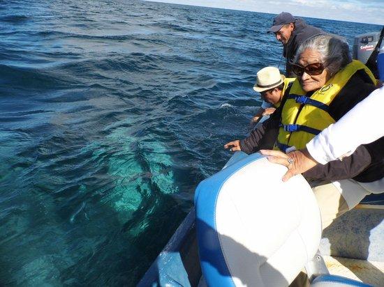 Magdalena Bay Whales:                   La ballena jugando con nosotros