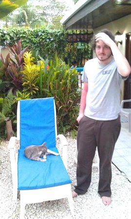 Hotel Perico Azul:                   Hotel kitty on a lounge chair in the garden by the pool.
