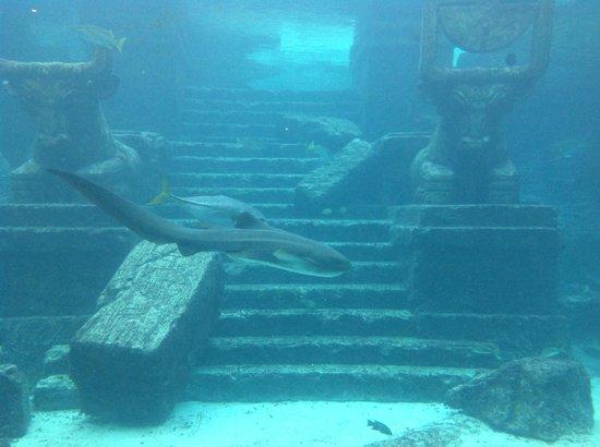 Atlantis Beach Tower, Autograph Collection:                   acuario