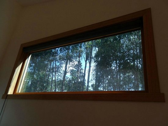Southern Forest Accommodation :                   View from the bedroom window
