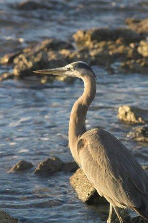 Sapphire Beach:                   Beautiful bird