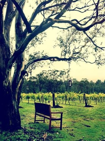Spicers Vineyards Estate: their vineyard at the restaurant