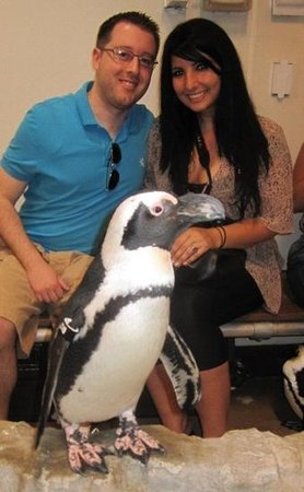 Newport Aquarium:                                     penguin encounter