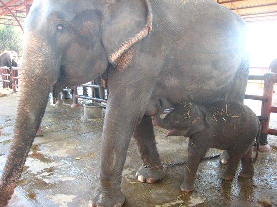 my elephant - Picture of Elephantstay, Ayutthaya - TripAdvisor