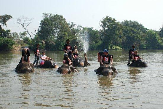 Elephantstay (Ayutthaya, Thailand): 2017 Reviews - Top ...