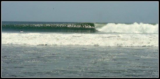 Luna Negra:                   Surf