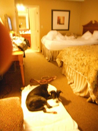 Best Western Savannah Historic District:                                                       nice, convenient, dog friendly room.