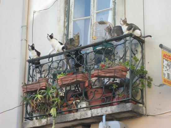 Bairro Alto: gatti .... con balcone