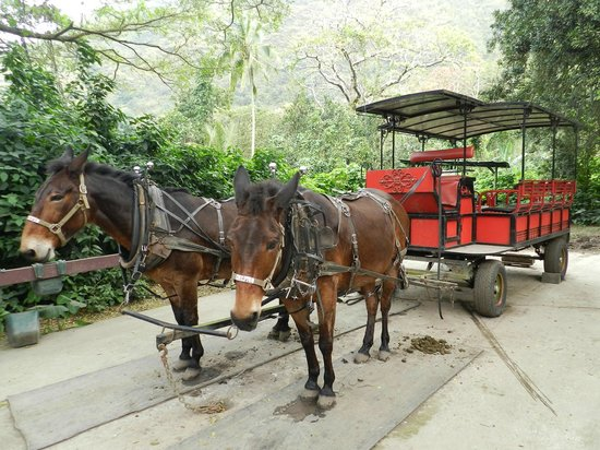 Waipi'o Valley Wagon Tours: Our Two Faithfull Donkeys & Wagon