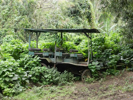 Waipi'o Valley Wagon Tours: The Original Wagon (Note The Wooden Wheels)