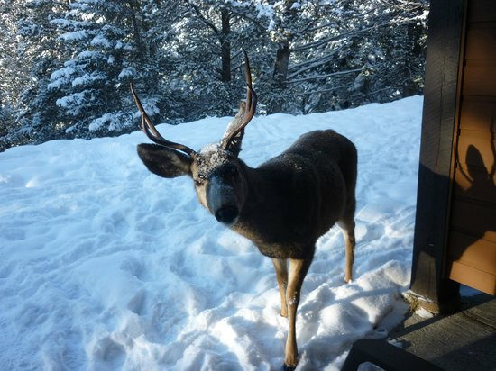 Hidden Ridge Resort:                                     Our daily visitor