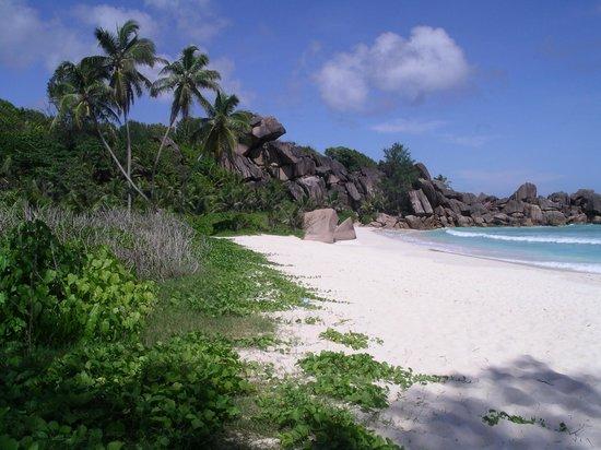 Grand Anse : La plage