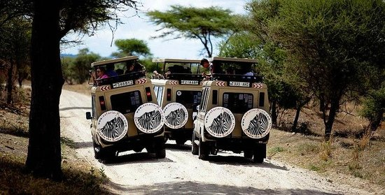 Safaris-R-Us: 3 of our cars in Tarangire National Park