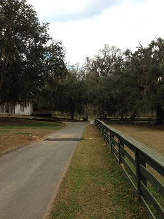 Pebble Hill Plantation:                                     the drive in...