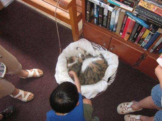 Breakers Hotel:                   フロント付近 猫のマイリのお昼寝場所