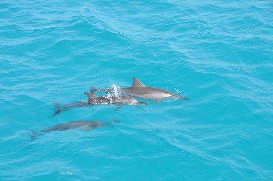 Fihalhohi Island Resort:                                     Dolphin's reef