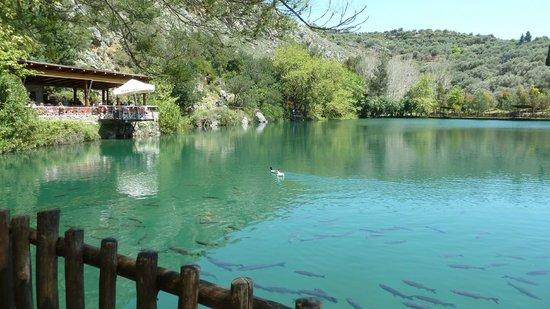 Eleonas:                   Ristorante sul lago Votomos (stessa superba gestione)