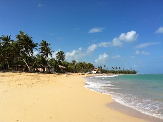 Sirenis Punta Cana Resort Casino & Aquagames:                   spiaggia