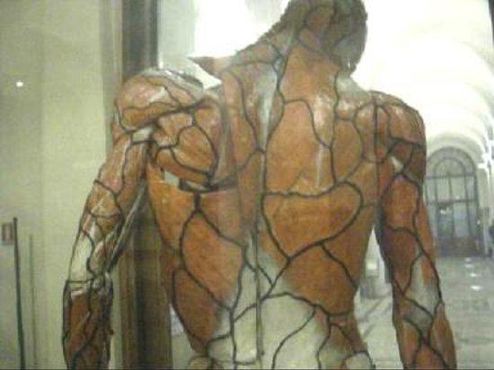 Foto de Museo di Anatomia Umana, Turín: modello anatomico retro ...