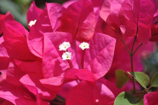 Kona Kai Resort, Gallery & Botanic Garden:                   Again gardens