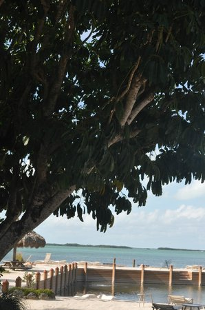 Kona Kai Resort, Gallery & Botanic Garden:                   Amazing trees