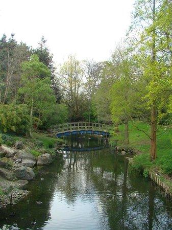 Regent's Park:                   Gorgeous little bridge