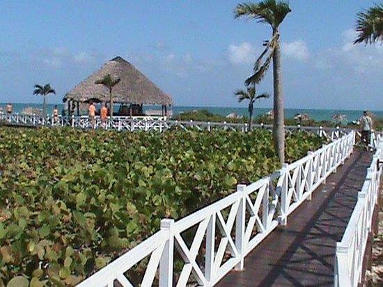 Melia Cayo Santa Maria:                   Allée vers la plage