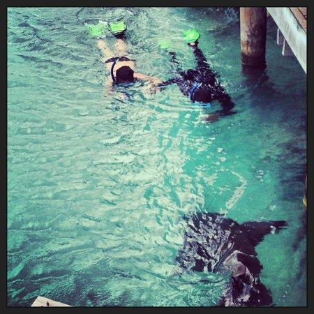 ClubHotel Riu Ocho Rios:                                     sharks