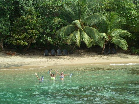 Escape Beach Bar & Grill: The Beach Bar is hidden behind the Palm Trees