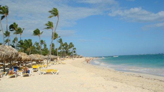 Iberostar  Bávaro Suites:                   Les palmiers donnent le sens du vent