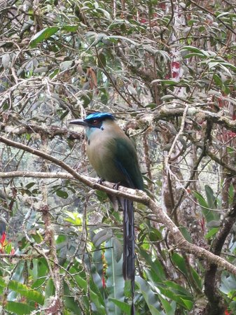 Inkaterra Machu Picchu Pueblo Hotel: Gorgeous bird we saw on our bird walk on the hotel property