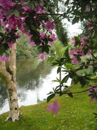 Pousada Estância Maktub:                   vista do Rio Ipiranga