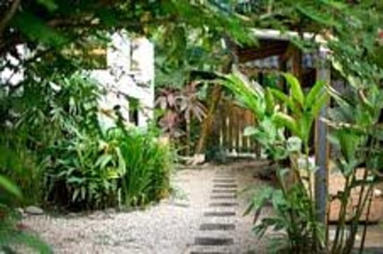 Blue Surf Sanctuary: Our amazing tropical gardens