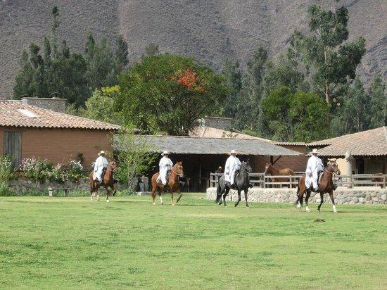 Sol y Luna - Relais & Chateaux: Peruvian Paso Horses